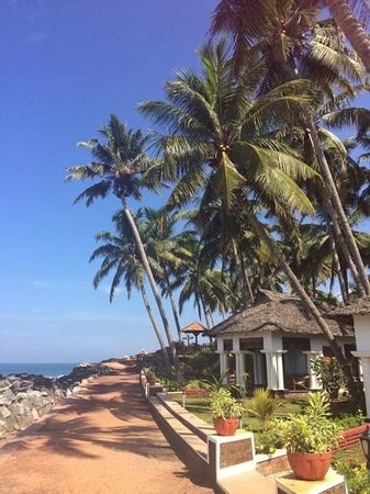 Palm Tree Heritage: beach cottage