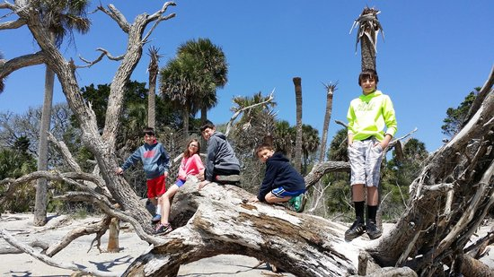 Botany Bay Plantation Heritage Preserve and Wildlife Management Area: Old trees provide a natural jungle gym for the little ones to explore