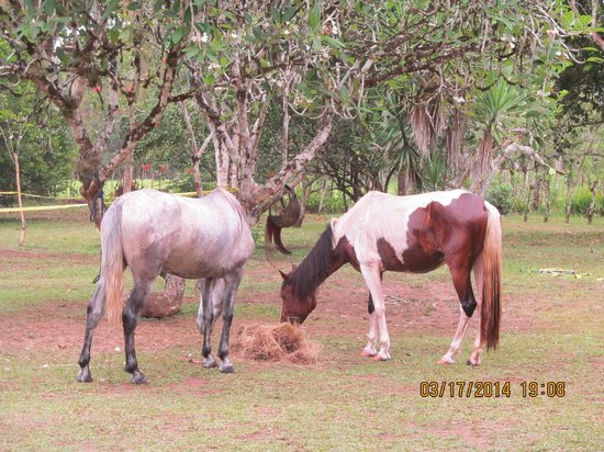 Magellan Boutique Hotel: Horses for yoga (Kindred Spirit & Yoga with a View)