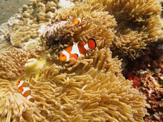 Namloo Divers - Day Diving : Nemo