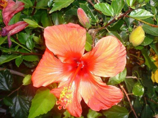 Canary Garden Club: So pretty