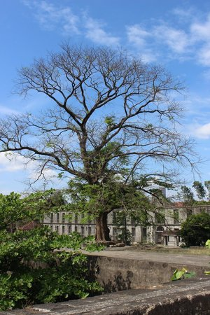 Fort Santiago: The tree to me looked as old as the buildings :)