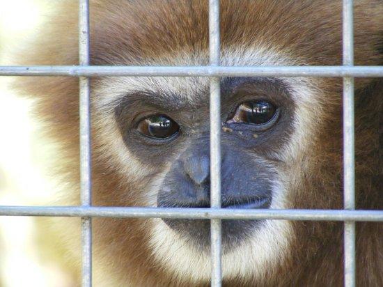 Zoo du Bois d'Attilly: Tout est résumé dans son triste regard...