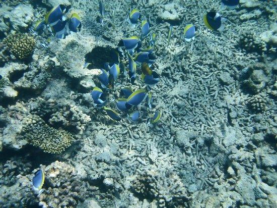 Club Med Kani : Diving