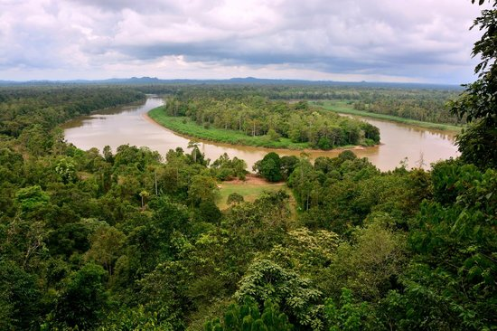 Myne Resort : View of the river from the lookout about 20mins walk in the rainforest