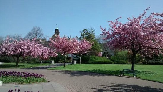 Cardiff On Foot: Cherry blossom in Alexandra Gardens, Cathays Park