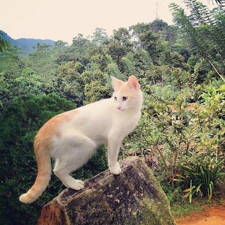 Singharaja Garden ECO-Lodge : house cat