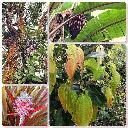 Singharaja Garden ECO-Lodge : plants from the garden