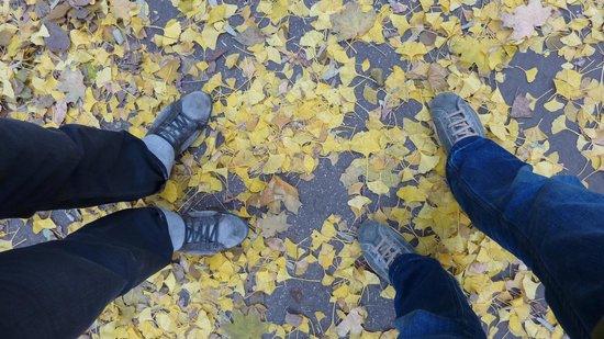 Margaret Island (Margitsziget): Autumn in Budapest