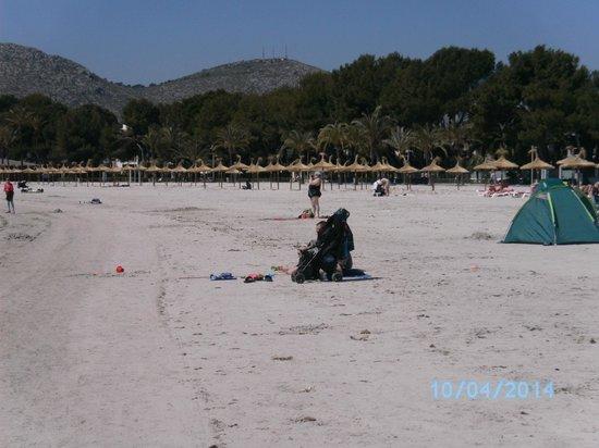 Playa de Alcudia: Playa limpia