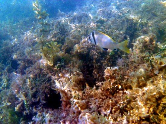 Three Corners Rihana Inn: vue poissons de la plage Rihana