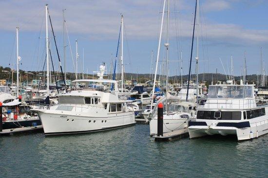 Keppel Haven : Harbour