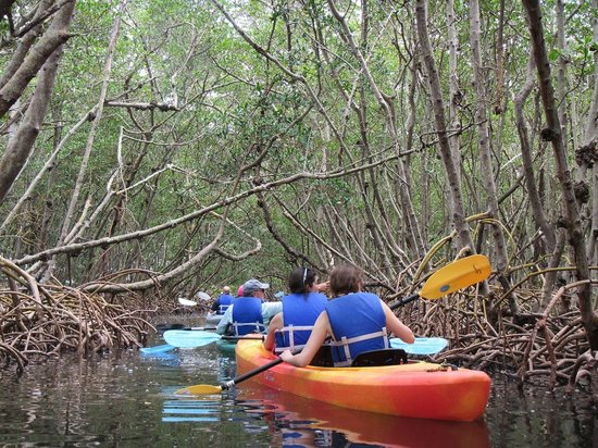I Kayak Sarasota: Mangrove tunnels