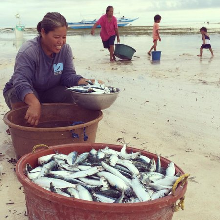 AABANA Beach & Watersport Resort Malapascua: The day's catch