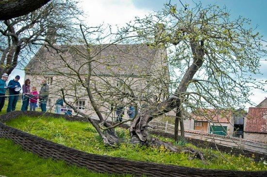 Woolsthorpe Manor: Newton's Apple Tree