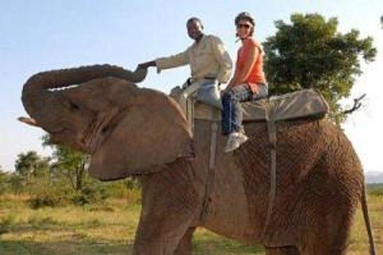Ngwenya Lodge: elephant experience