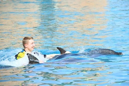 Dolphin Bay: A ride back to the Lagoon