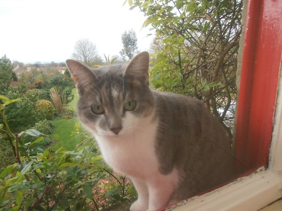 High Farm Bed and Breakfast: Plus cat!!