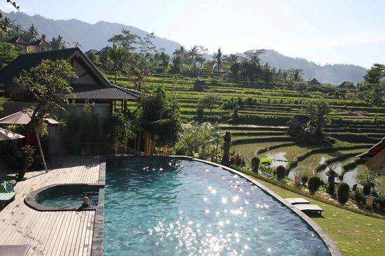 Sawah Indah Villa: Amazing pool!