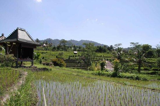 Sawah Indah Villa: Great place to relax