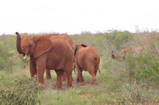 Sognando il Kenya: elefanti nella savana