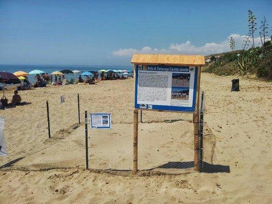 Sciacca, Taliansko: Il nido di tartarughe caretta caretta del 2013