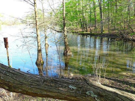 The Bog Garden at Benjamin Park: pond to bird watch