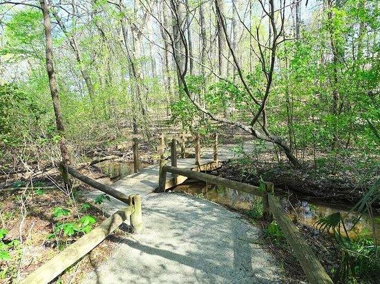 The Bog Garden at Benjamin Park: bridge along path