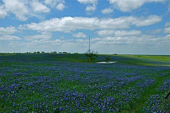 Ennis (TX) United States  city pictures gallery : Ennis, Texas Picture of Bluebonnet Trail, Ennis TripAdvisor