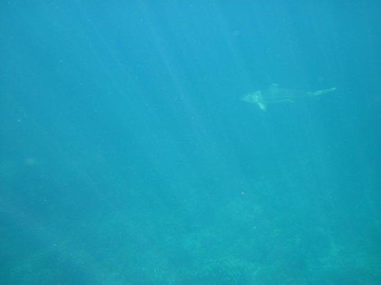 Laguna Redang Island Resort: Questo era più grosso...