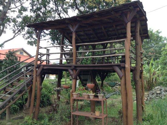Darang Tea Estate: The treehouse