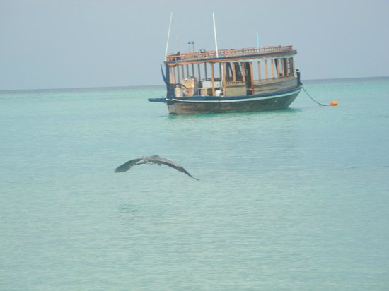 Angaga Island Resort & Spa: DHONI