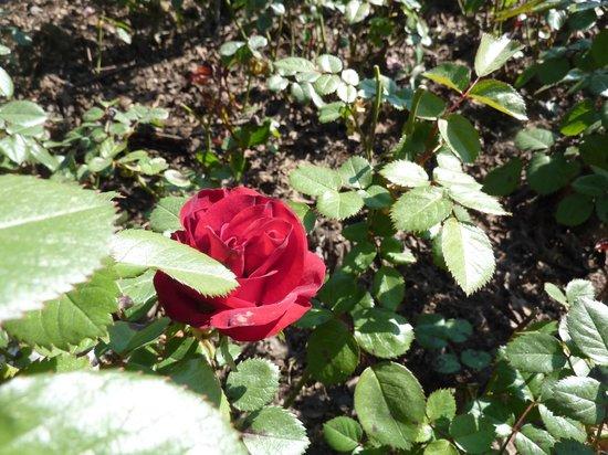 1 re rose photo de la colline aux oiseaux caen tripadvisor - La colline aux oiseaux caen ...