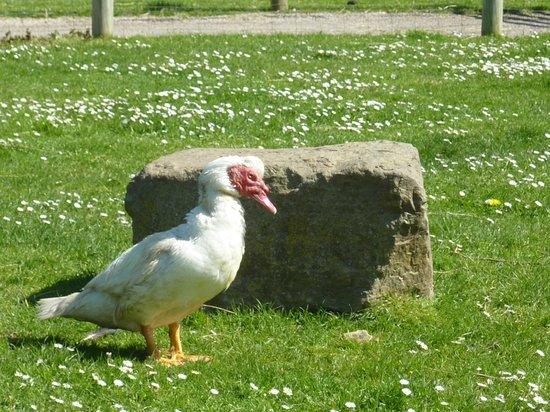 La petite normandie photo de la colline aux oiseaux - La colline aux oiseaux caen ...