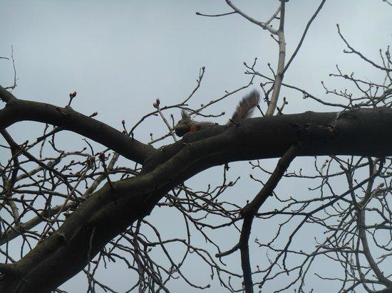 Sparrow Hills (Vorobyovy Gory) : Обещанная белочка.