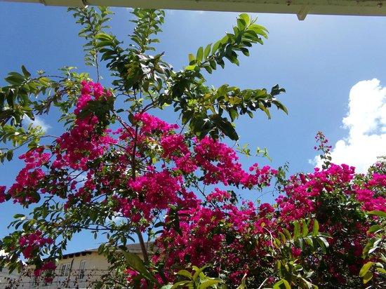 Bay Gardens Hotel: gardens