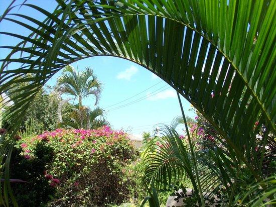 Bay Gardens Hotel : gardens