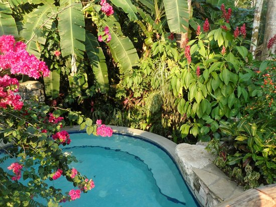 Ian Anderson's Caves Branch Jungle Lodge : Pool - beautiful gardens