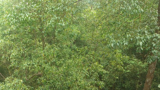 MacRitchie Nature Trail : View from Tree Top