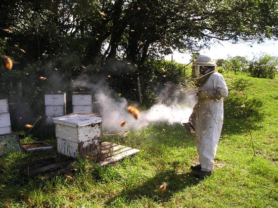 Les Trois Acres/Three Acres : Steve, 3acres Beekeeper
