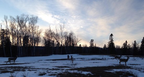 Lutsen Resort on Lake Superior: Our kids loved seeing the deer trotting around and playing outside our Cliff House Townhome!