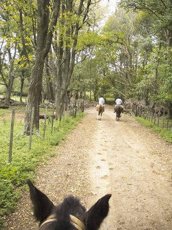 Dos Lunas Horse RIding Lodge : The main road leading to Dos Lunas