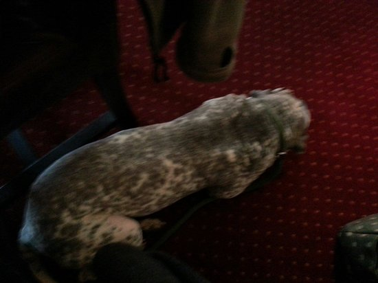 The Rose Cottage: Loving the warmth and cosy carpet, biscuits & water make Ralphy a happy boy