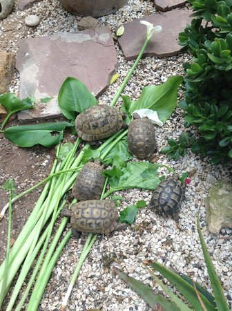 Dar Beldi : Les tortues