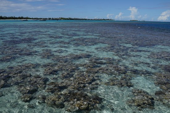 Shangri-La's Villingili Resort and Spa Maldives: Corals clearly visible from deck outside the villa during low tide. Water is pristine!
