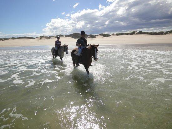 Papiesfontein Beach Horse Rides : Reiten im Meer