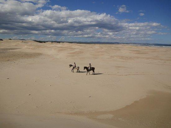 Papiesfontein Beach Horse Rides : Reiten durch endlose Weite