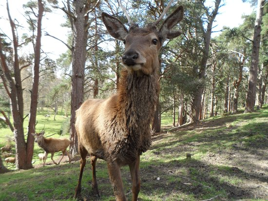 Quad Bike Treks Aviemore: Up close and personal with the deer!