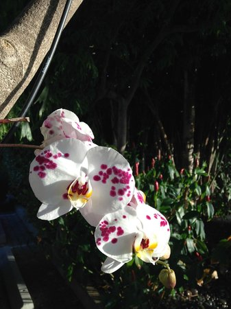 Orchid Key Inn: An orchid in the car park!