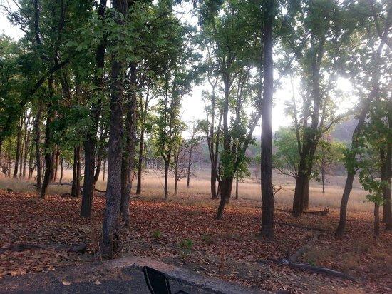 Baghira Log Huts: Early morning